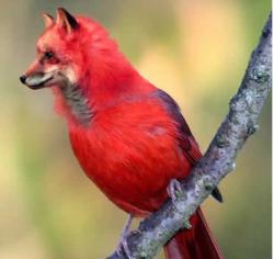 papagal2