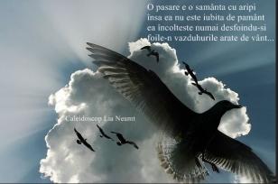 PASARE 2
